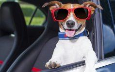 Poggiatesta Auto Per cani Sakura