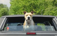 Telo Auto Coprisedili Per Cani