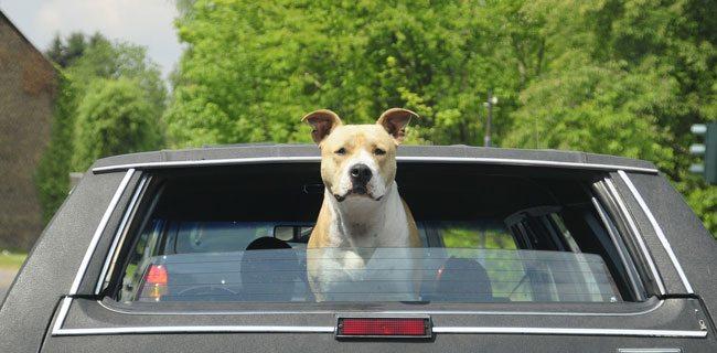 Telo auto coprisedili per cani offers europe italia for Amazon trasportini per cani